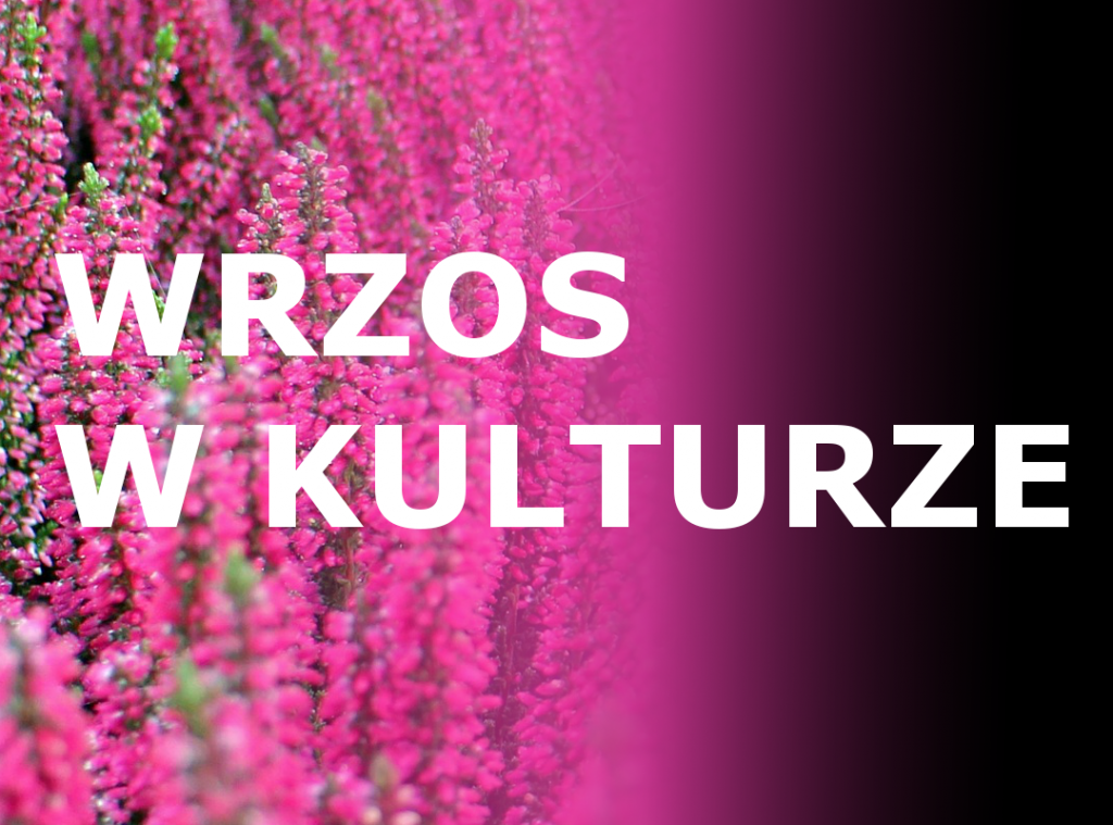 wrzos-w-kulturze